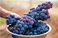 吃葡萄的六大好处 吃葡萄对于女性的功效以及作用