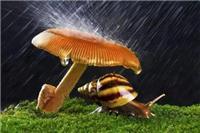 蜗牛的天敌是什么 哪种蜗牛有毒养蜗牛会带来病毒吗