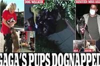 LadyGaga遛狗员遭枪击怎么回事 Gaga因宠物狗被勒索真相深扒